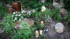 Das Schönste: Frühstückseier im Garten