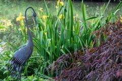 Am Ufer unseres Teichs wachsen Lilien