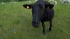 Schwarze Schaf