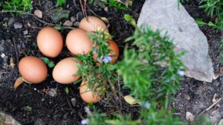 Bio-Eier vom Biolandhof Wiersdorf